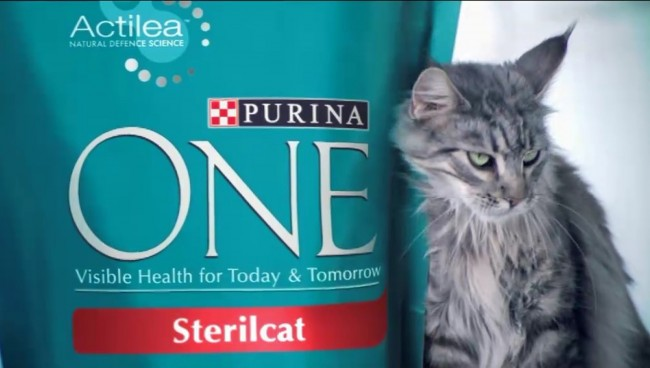 Purina One Cat Food Vs Adirondacks